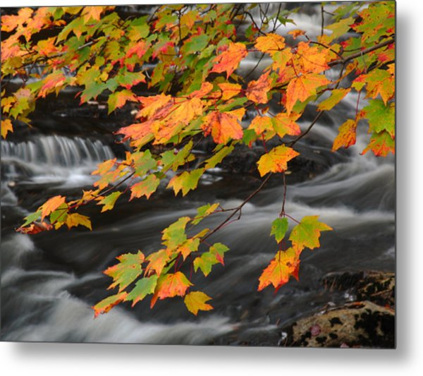 Fall Foliage In Acadia National Park  Metal Print by Juergen Roth