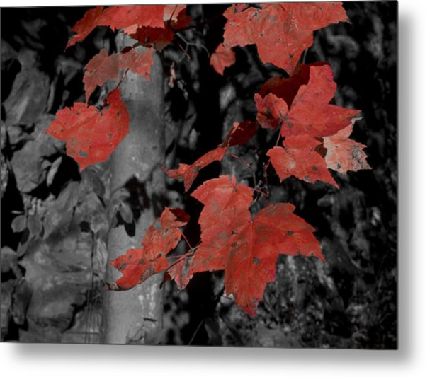 Fall Foliage In Pennsylvania Metal Print by Bob Hahn