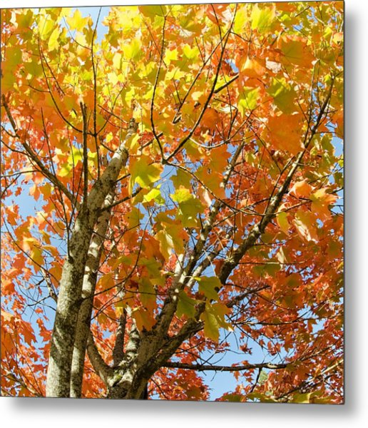 Metal Print featuring the photograph Fall Foliage by Margaret Pitcher