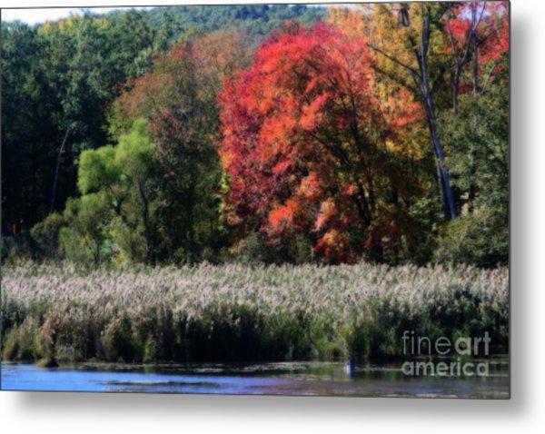 Fall Foliage Marsh Metal Print