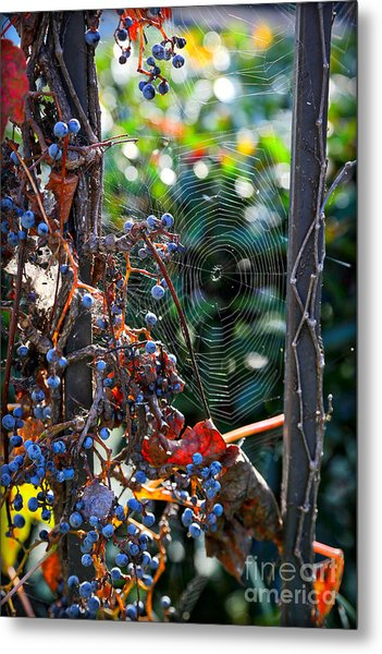 Fall Grapes With Spider Web Metal Print