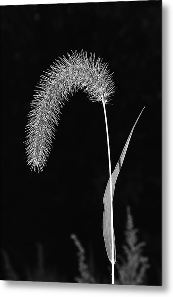 Fall Grass 1 Metal Print