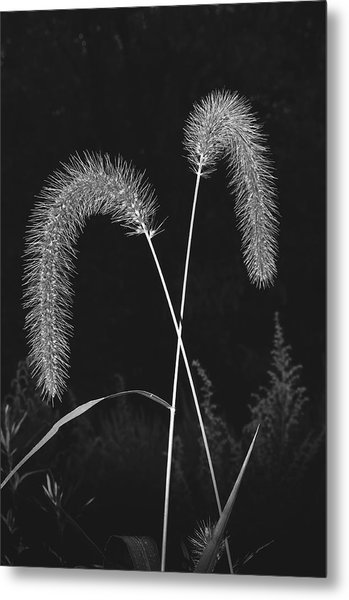 Fall Grass 2 Metal Print