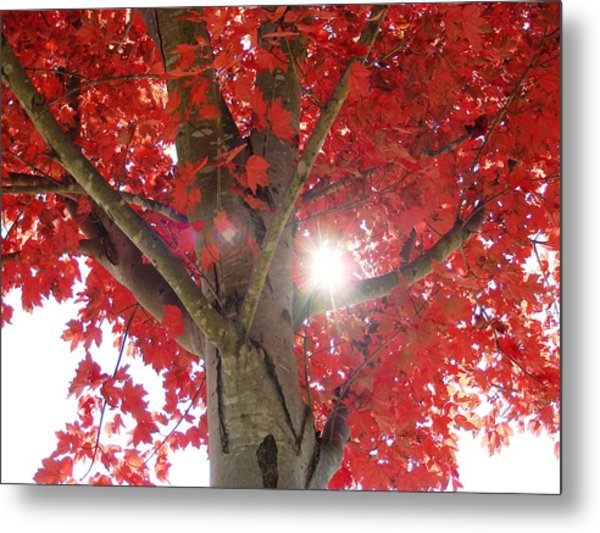 Fall In Georgia Metal Print by Linda Russell