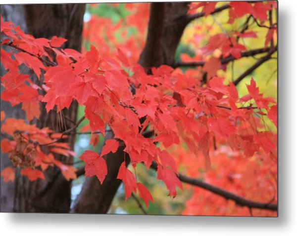 Fall In Red Metal Print
