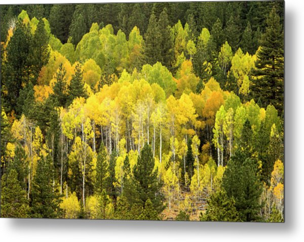 Fall In The Sierras Metal Print