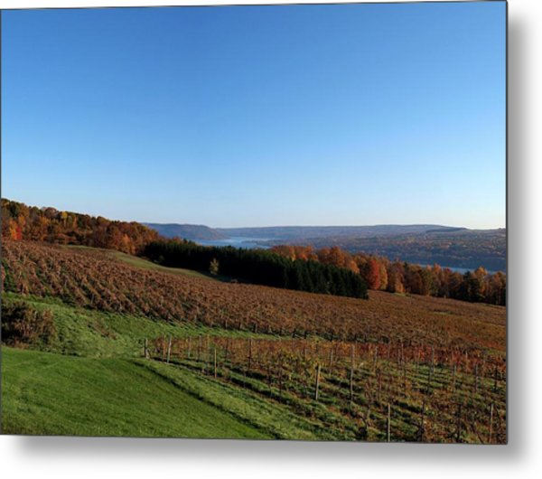 Fall In The Vineyards Metal Print