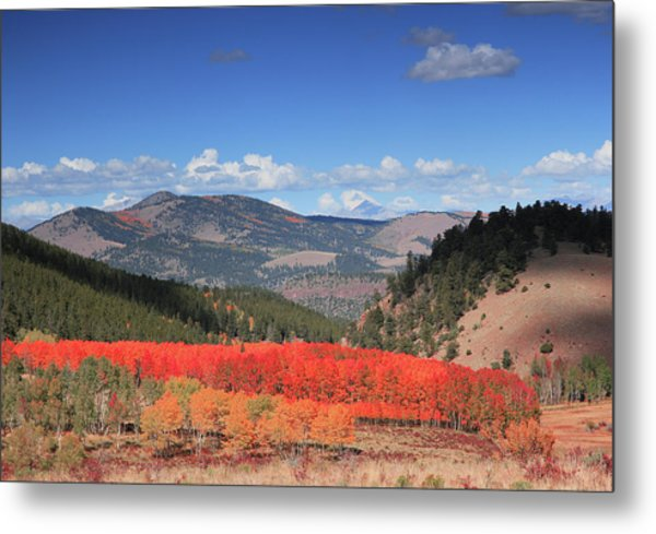 Fall In  Ute Trail  Metal Print