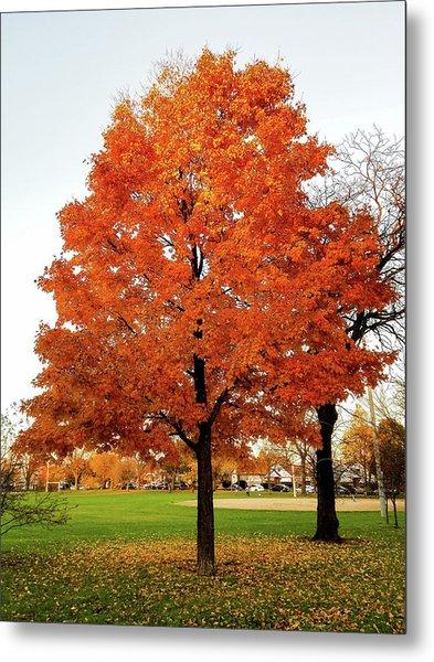 Fall Is Coming Metal Print