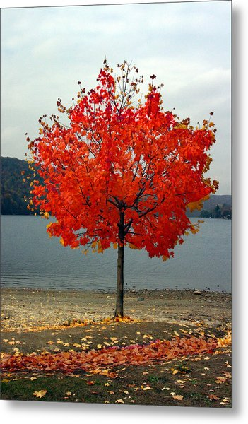 Fall Is Here Metal Print by Dennis Curry