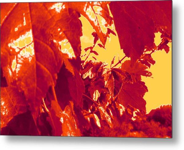 Fall Leaves #13 Metal Print