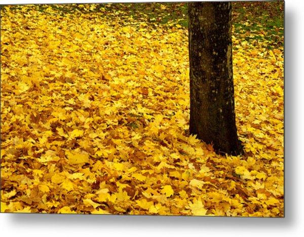 Fall Leaves Metal Print by Val Jolley