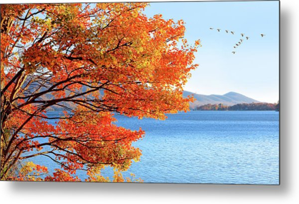 Fall Maple Tree Graces Smith Mountain Lake, Va Metal Print