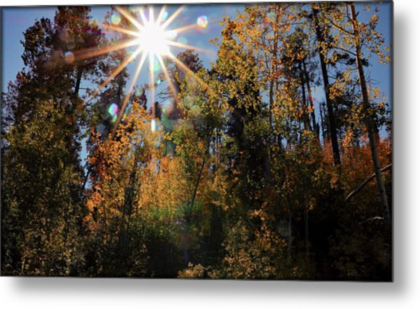 Fall Mt. Lemmon 2017 Metal Print