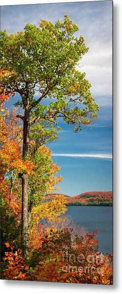 Metal Print featuring the photograph Fall Oak Tree by Elena Elisseeva