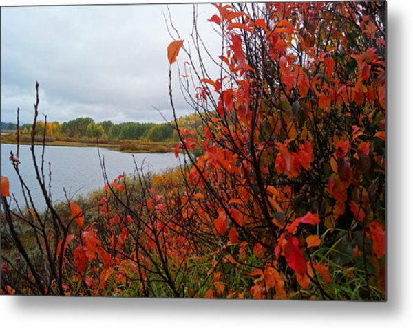 Metal Print featuring the photograph Fall On The Lake by Broderick Delaney