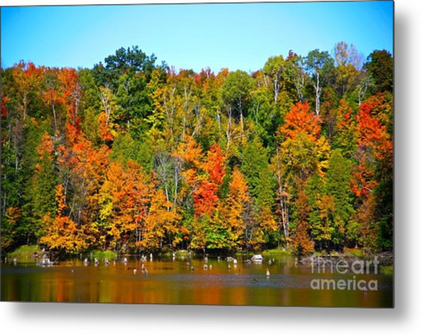 Fall On The Water Metal Print by Robert Pearson
