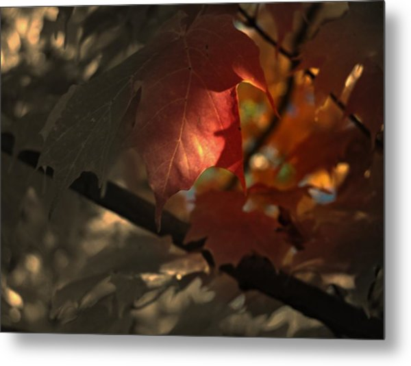 Fall Or Not Metal Print