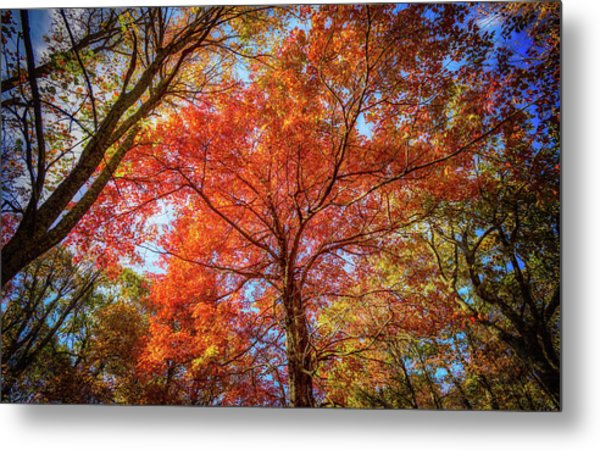Fall Red Metal Print