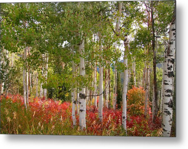 Fall Splender 47 Metal Print