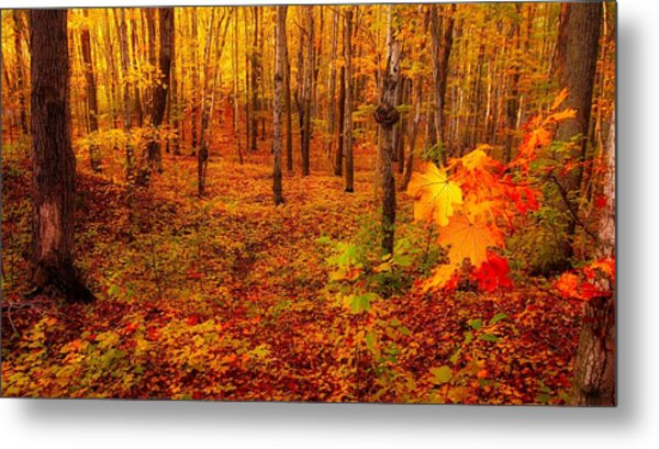 Fall Sugar Bush Metal Print