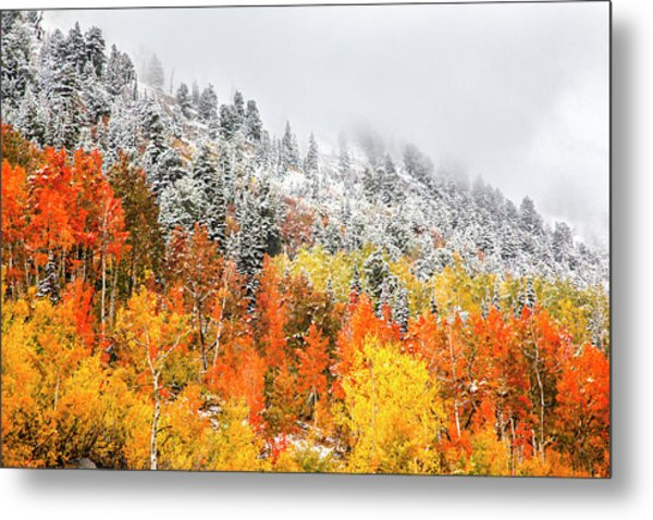 Fall To Winter Canvas Print, Photographic Print, Art Print, Framed Print, Greeting Card, Iphone Case Metal Print