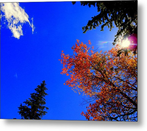 Metal Print featuring the photograph Fall Up by Karen Shackles