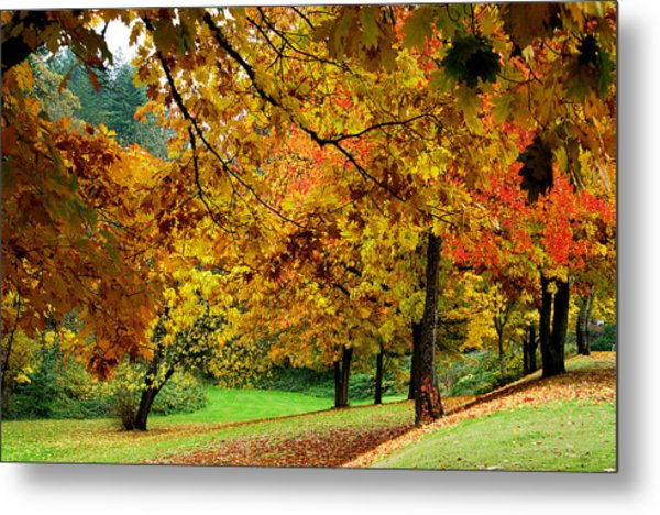 Fall Metal Print by Val Jolley