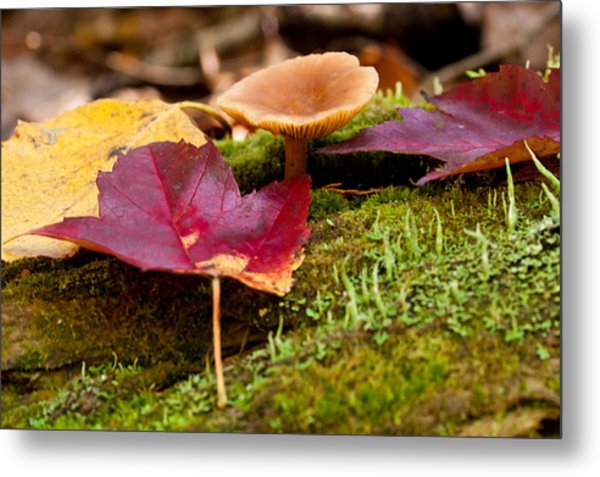 Fallen Leaves And Mushrooms Metal Print