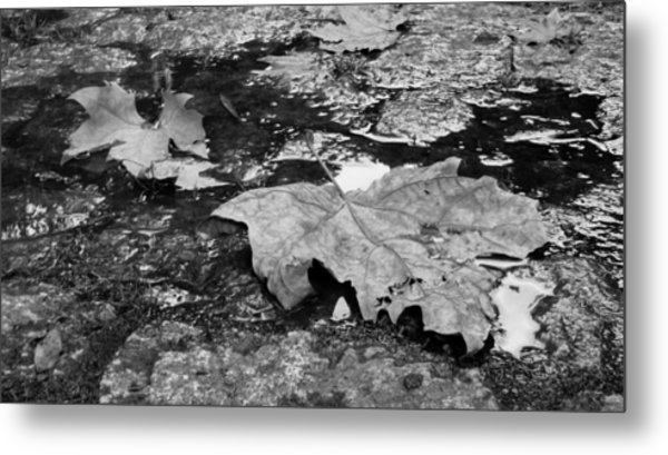 Fallen Leaves Metal Print by Andre Panatto