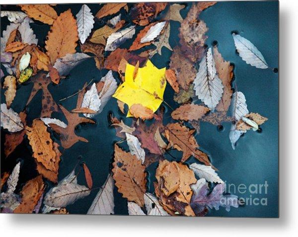 Fallen Leaves Metal Print by Hideaki Sakurai