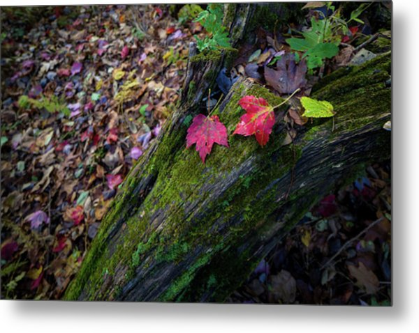 Metal Print featuring the photograph Fallen Leaves On The Limberlost Trail by Lori Coleman