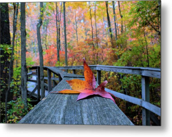 Fallen Maple Leaf Metal Print
