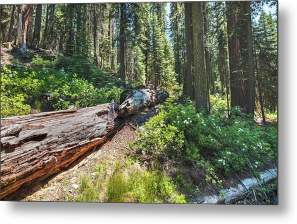 Fallen Tree- Metal Print