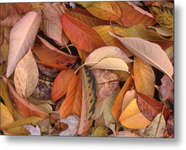 Falling Leaves On The Ground Metal Print by Lyle Crump