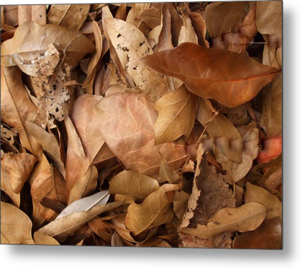 Family Of Leaves Metal Print by Janet  Telander