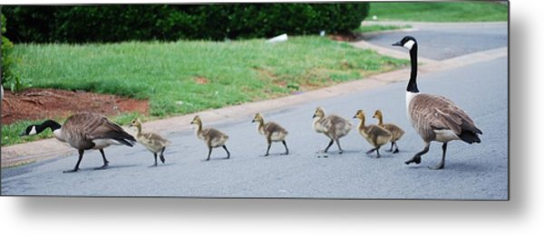 Family Outing Metal Print by Trudi Southerland