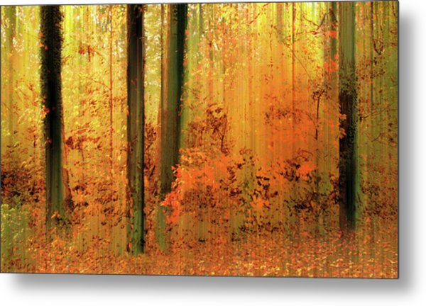 Metal Print featuring the photograph Fanciful Forest by Jessica Jenney