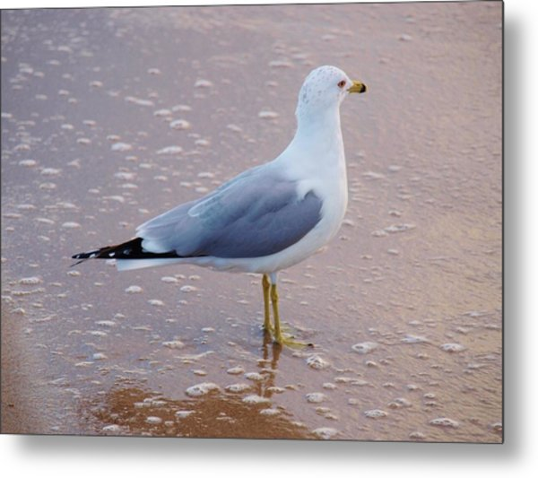 Fancy Gull Metal Print