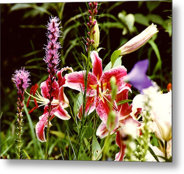 Fancy Lilies In Garden Metal Print