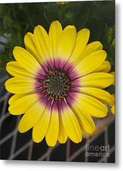 Fascinating Yellow Flower Metal Print