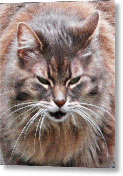 Fat Cats Of Ballard 4 Metal Print