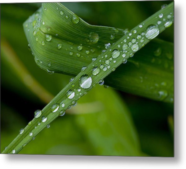 Fat Raindrops Metal Print by Robert Ullmann