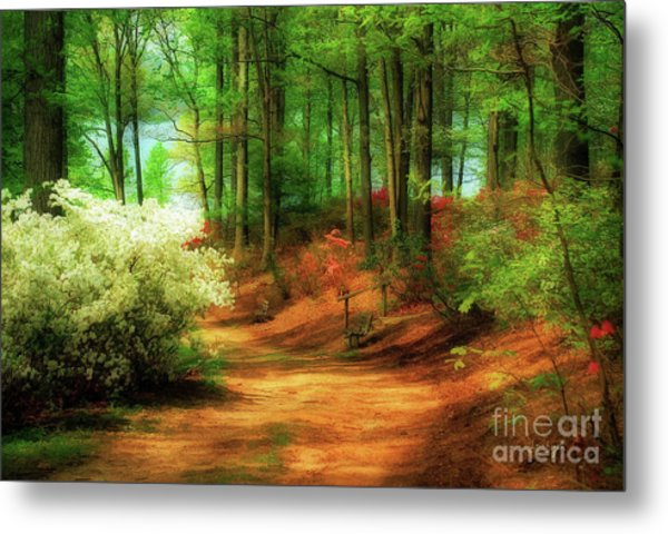 Metal Print featuring the photograph Favorite Path by Lois Bryan