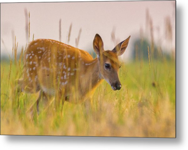 Metal Print featuring the photograph Fawn In Grasslands by John De Bord