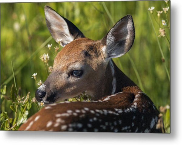 Fawn Over The Shoulder Metal Print