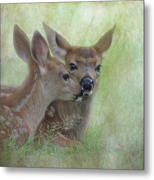 Metal Print featuring the photograph Fawn Secrets by Sally Banfill