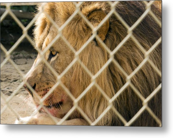 Feast For A King Metal Print