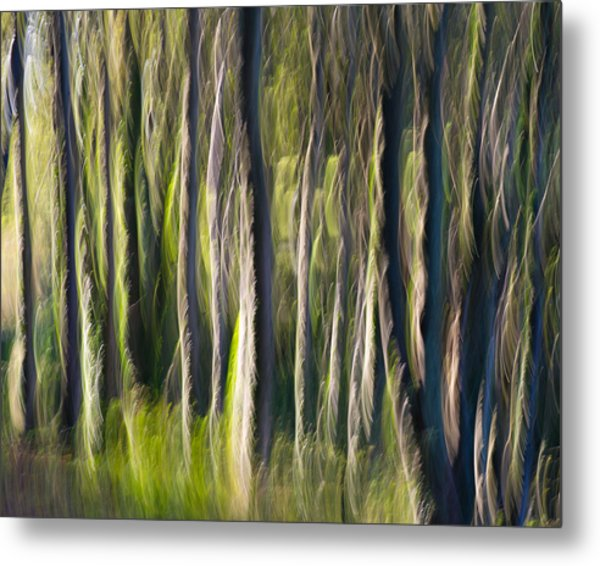 Feather Forest Metal Print
