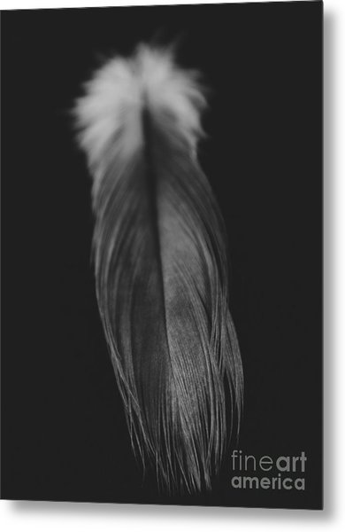 Feather In Black And White Metal Print